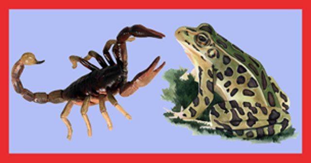 Ο σκορπιός, ο βάτραχος και ο … ΣΥΡΙΖΑ