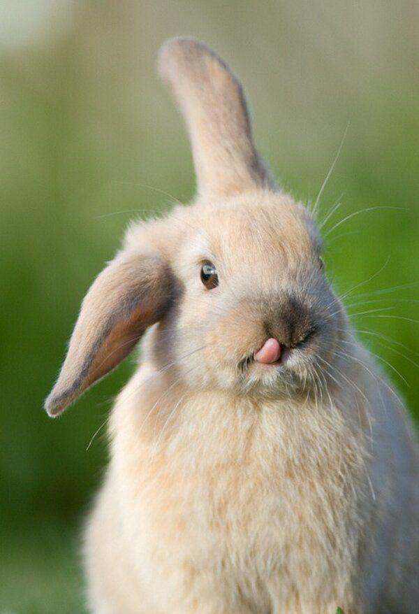 The Derp Rabbit