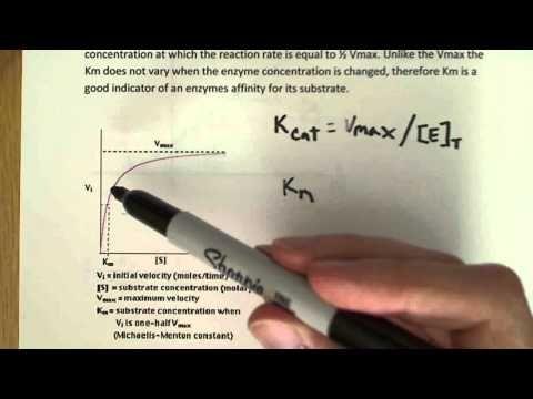 Enzyme kinetics introduction
