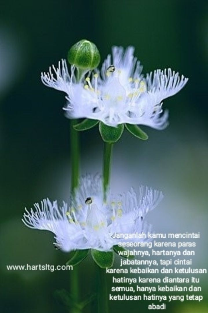 Cinta Setulus Hati Bunga Bunga Indah Bunga Eksotis Bunga Langka