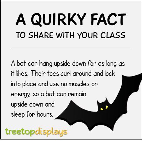 A quirky fact about bats to share with your class - from Treetop Displays. Visit our TpT store for printable resources by clicking on the provided links. Designed by teachers for Pre-Kindergarten to 7th Grade.