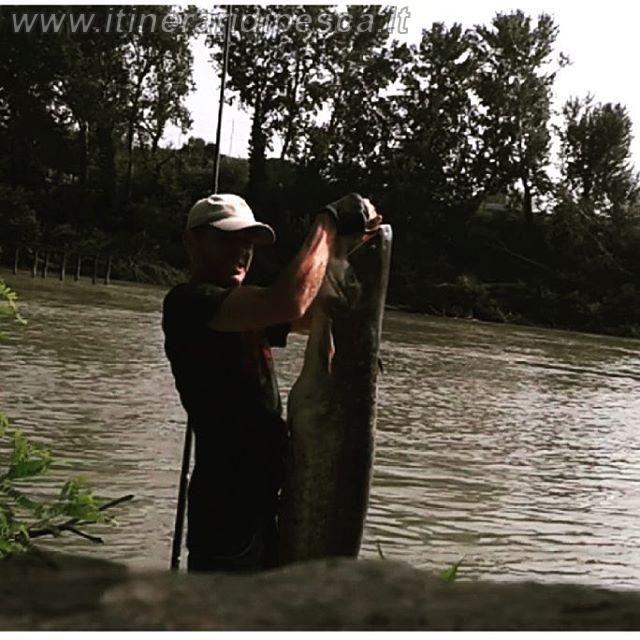Quale artificiale per lo spinning al siluro? pesca fishing