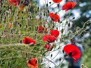 Faluhelyen itthon és másutt: Család a kertben, Élet a szabadban