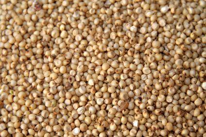 Kevésbé közismert, gluténmentes gabonaféle a cirok, melyből nem csak seprű készülhet. Érdemes kipróbálni étkezési célra, mivel gyógyhatással is...