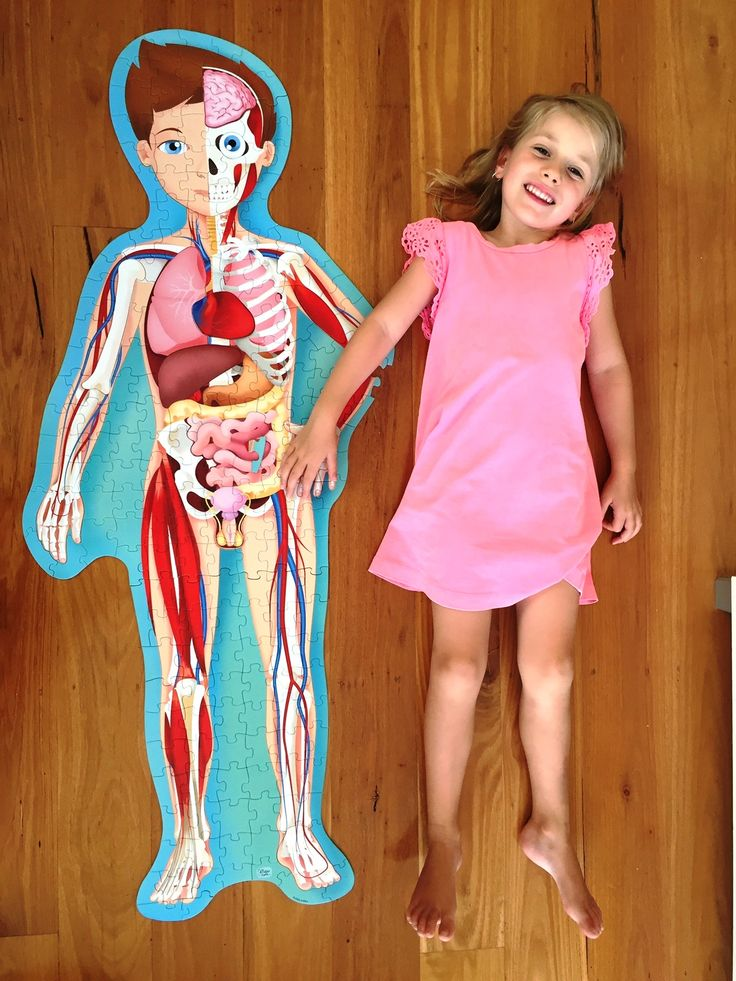 NEW from Sassi Junior! Take a fascinating tour of the human body! How does your respiratory system work? What kind of bones make up a skeleton? How does food get digested? How many cells does one body contain? Put together the detailed puzzle and read the book to learn all about the life cycle and the human body! Includes 10 special-shaped pieces