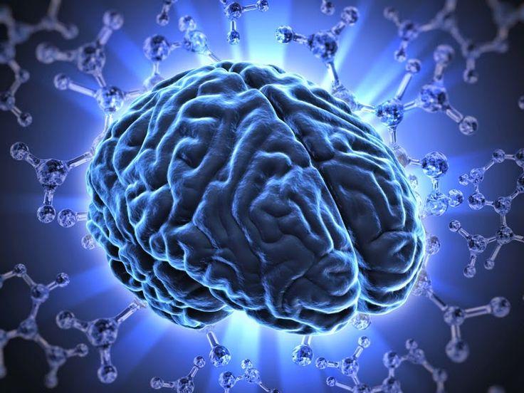 UZDROWICIELE BIOTERAPIA AKUPRESURA ZIOŁOLECZNICTWO EGZORCYZMY: Najczęstsze choroby mózgu - leczenie ziołami