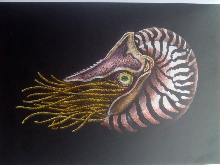 Nautilus By Clivenia Collins