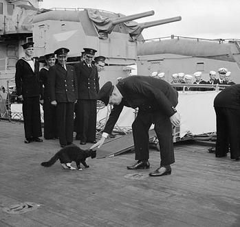 A cat survived the sinking of three separate ships in World War Two, earning the moniker 'Unsinkable Sam.'
