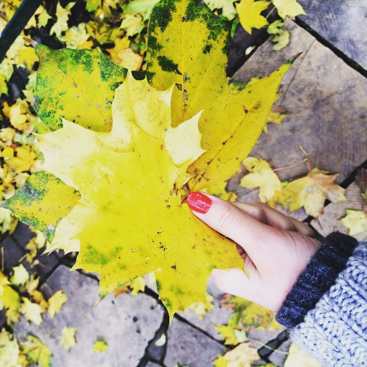 Beautiful autumn and lovely walk with friends.