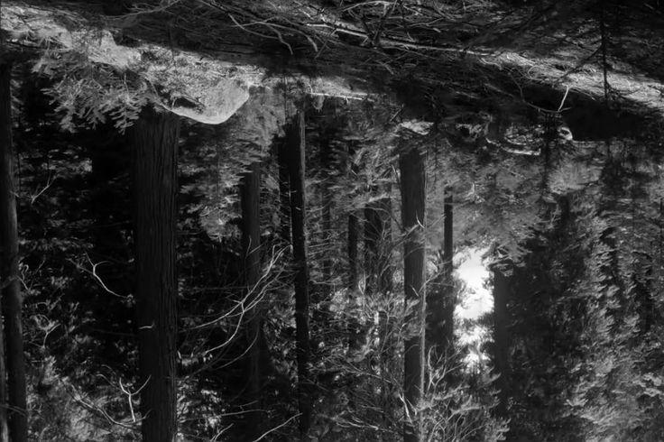 A pancada negra dos Névoa | P3