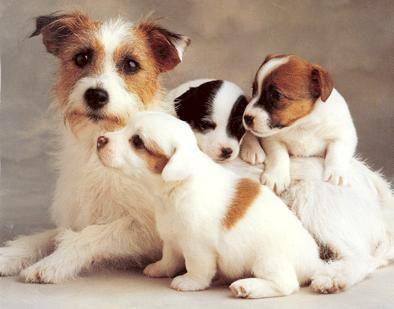 Heerlijk z'n foto van moeder met pups