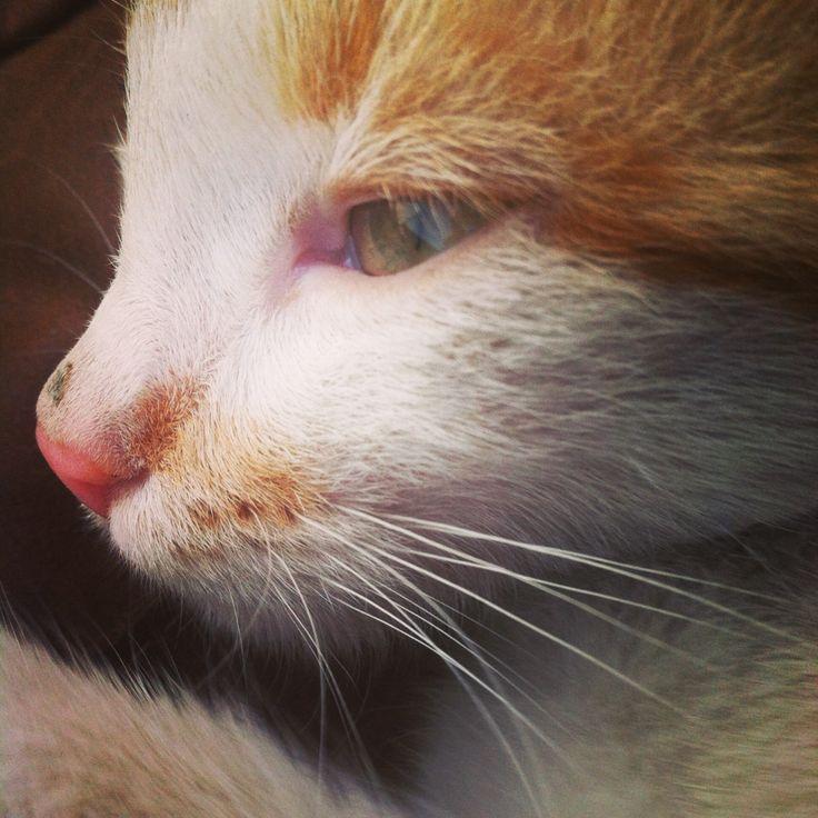 Mitze Katze