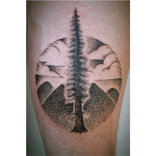 1000 images about redwood tree tattoos and drawings on pinterest forest resources trees and. Black Bedroom Furniture Sets. Home Design Ideas