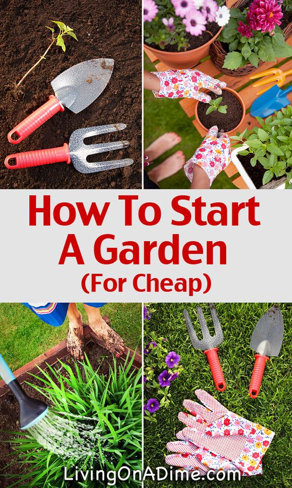 How To Start A Garden For Cheap