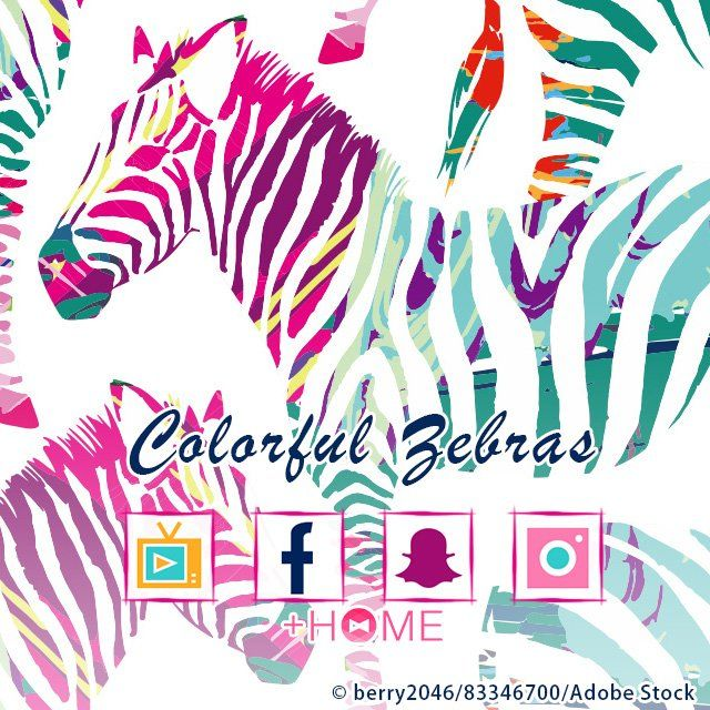 """Colorful Zebras""   These colorful zebras will make you smile, and they look nice too! Download this theme today.  Download Now:http://bit.ly/2nU09WP  #cute #wallpaper #design #icon #beautiful #plushome #homescreen #widget #deco"