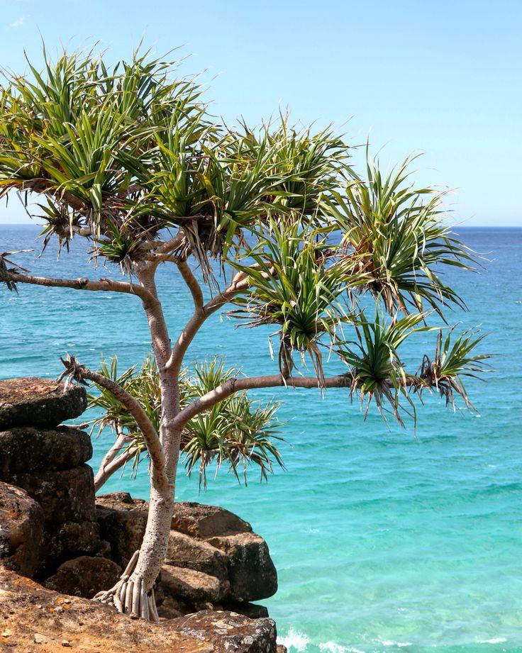 Point Danger Lookout, Dbah, Gold Coast