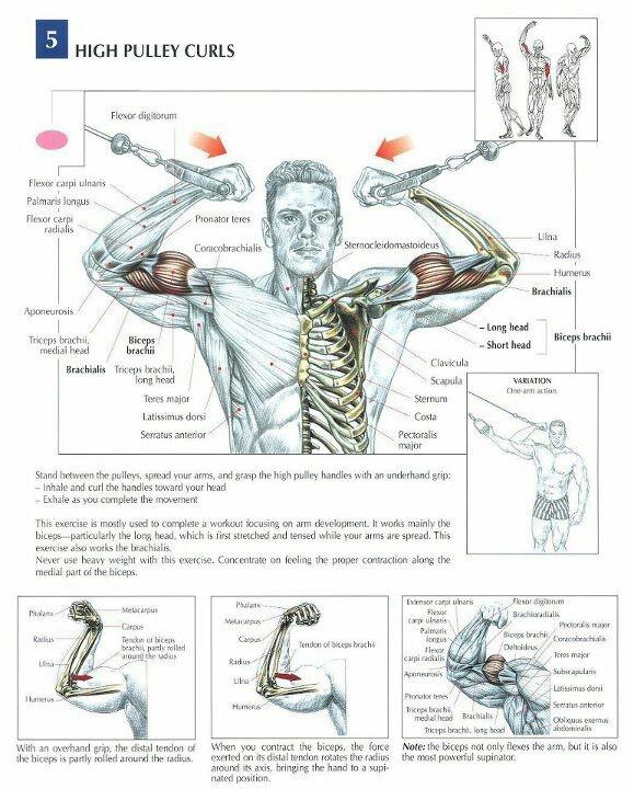 Hi From Tashkent Strength Training Anatomy 3rd Edition - anatomy for ...