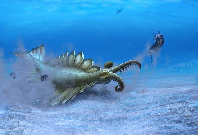 Resultado de imagem para Anomalocaris paleoart