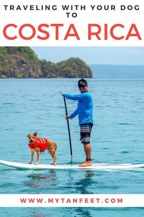 Bringing Dog To Costa Rica From Usa And Vice Versa Step By Step Guide Costa Rica Taking Dog Costa Rica Travel