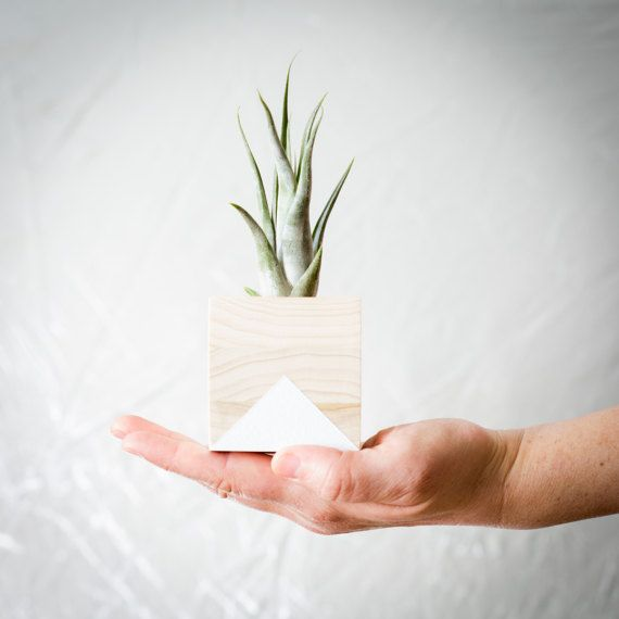 Wood Inspire Air Plant holders are perfect for nature lovers. Brighten up your living room, bookshelves, wall shelves, desks, coffee tables and more with this natural wood, hand painted pot and air plant. #airplants #airplantholders #airplanter #woodpots #woodinspire #giftsforher #giftsforhim #officedecor #shelfie #shelfdecor #homedecor #decoration #pot #planter #giftsformom #giftsfordad #weddingfavors #partyfavors