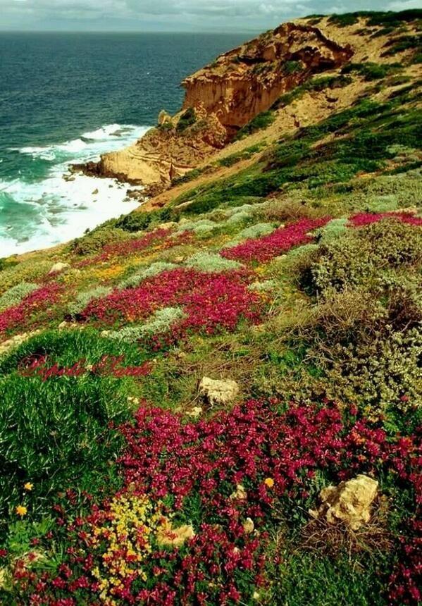 Collina del Sinis, Sardinia