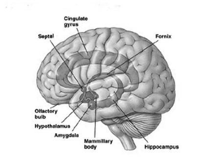 BrainMind.com