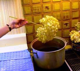 dyeing dry Hydrangeas....who knew
