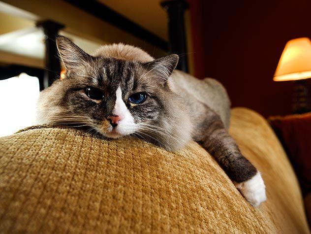 86525557-general-cat-care-632x475.jpg #caringforcat - See more at Catsincare.com!