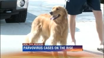 A local veterinarian has seen 7 cases of parvo in the last 2 weeks.