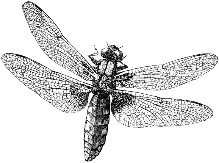 Dragonfly in three colors. Royalty Free Images Dragonfly