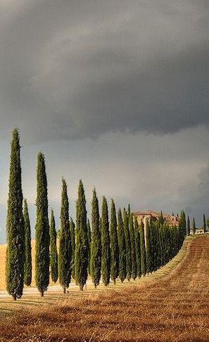 Toscana                                                                                                                                                     Mais
