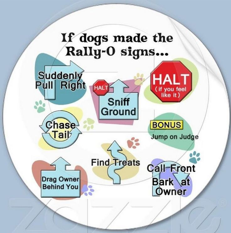 34 best Rally Obedience images on Pinterest Rally, Doggies and Dog - new dog training certificate template