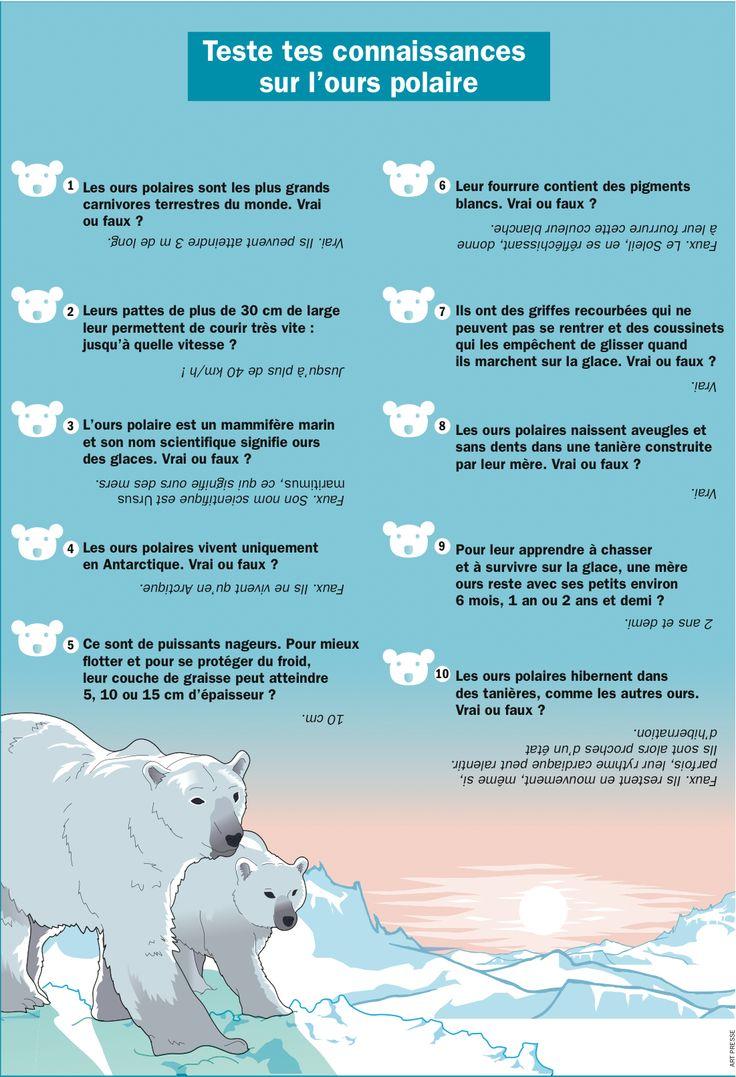 Fiche exposés : Teste tes connaissances sur l'ours polaire