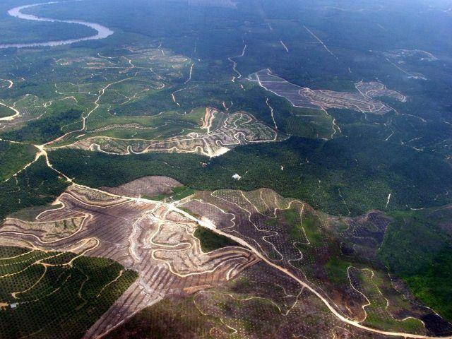Deforestasi di Indonesia Mengkhawatirkan