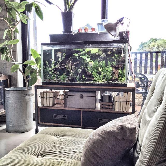 yupinokoさんの、おはよぅございます♡,DIY,インダストリアル,男前,アメブロやってます♡,a depeche,水槽,熱帯魚,淡水魚,溶接DIYした水槽台,リビング,のお部屋写真
