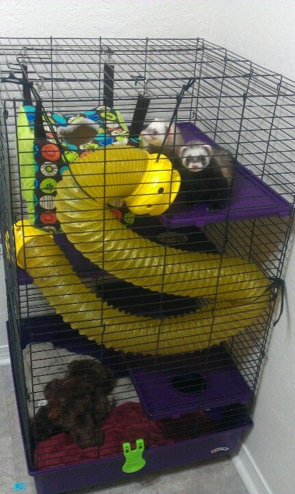 Ferrets...pretty ingenious what this owner did with the play tunnel!