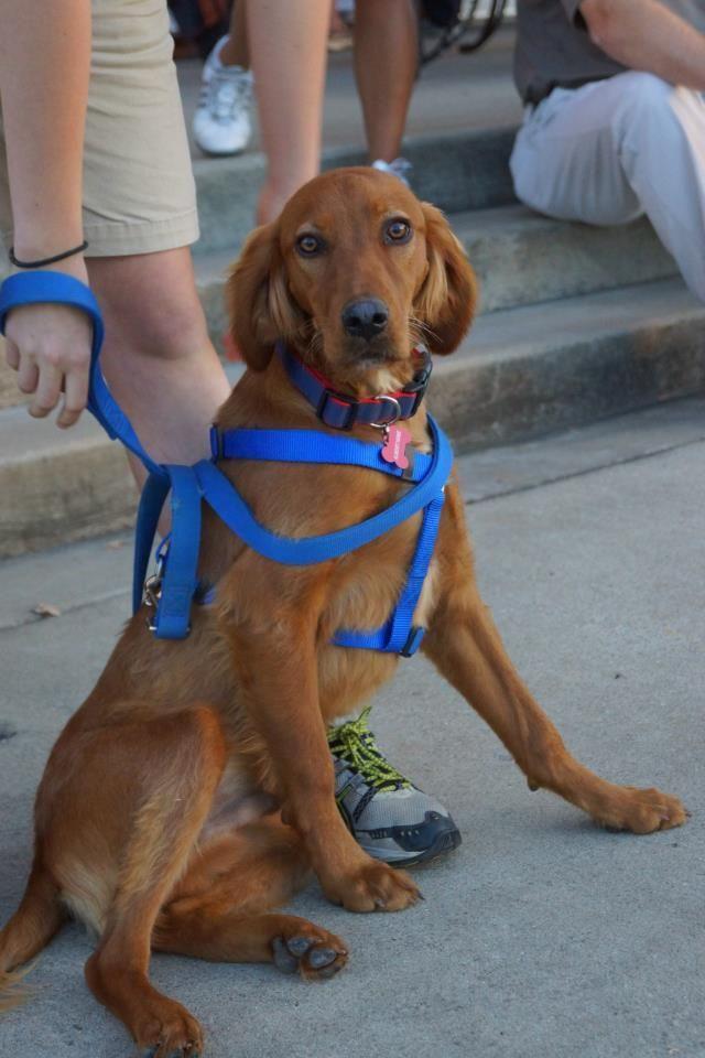 Irish Dog Rescue Homes