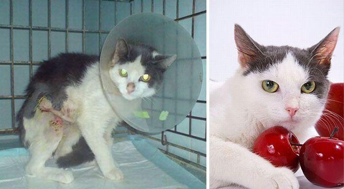 Кошки, до и после того, как их подобрали с улицы