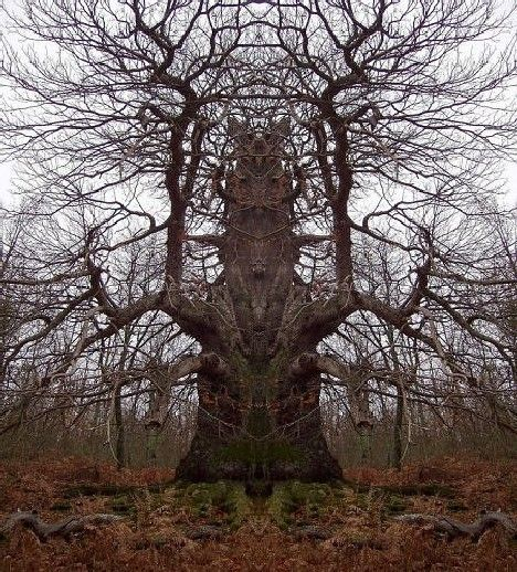 Google Image Result for http://webecoist.com/wp-content/uploads/2010/09/scary_trees_8b.jpg