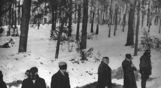 Las w Palmirach - niemy świadek zbrodni Niemców na Polakach