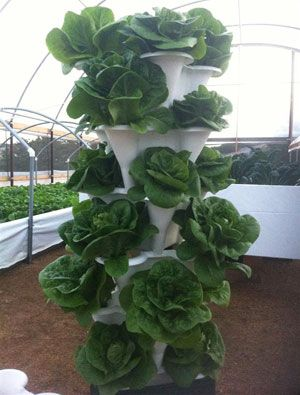 EzGro Garden. Vertical HydroponicsHydroponics ...