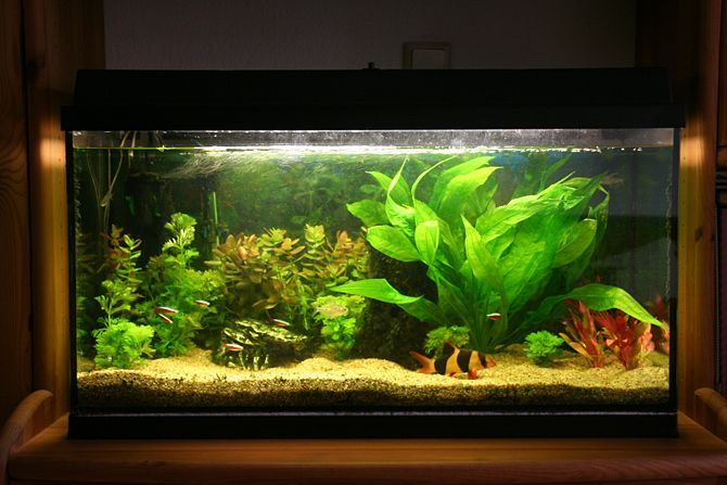 How to set up a community fish tank for Community fish tank