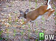 An oak raining acorns pulls several bucks and does into bow range. Watch to see what happens! #deer #hunting #bowhunting