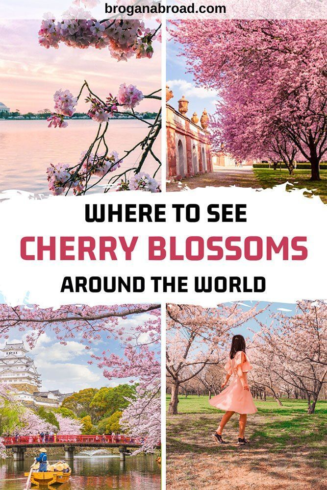 Where To See Cherry Blossoms Around The World In 2020 Cool Places To Visit Travel Inspiration Around The Worlds
