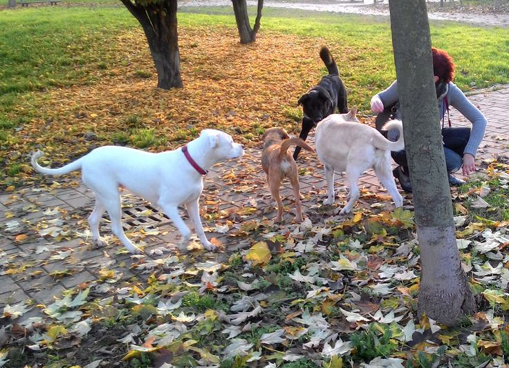 15/11/2015 - Torino con Aria, Liu e Peja