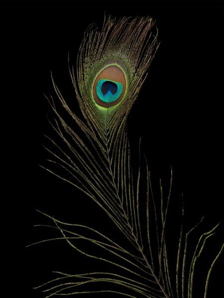 39 best images about black on pinterest september 28 for Acrylic painting on black background