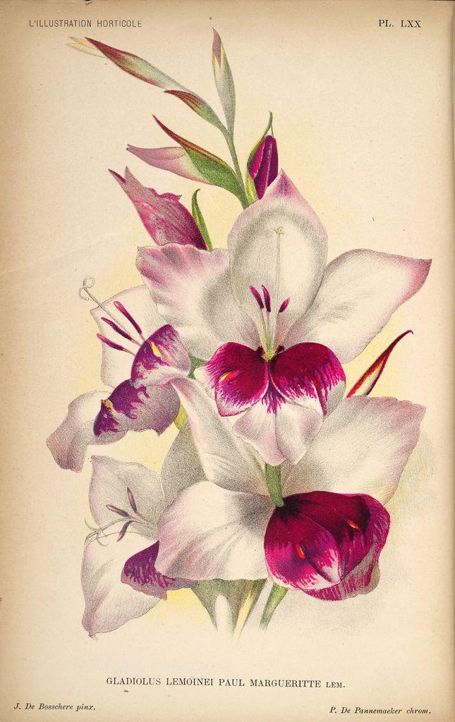 86 besten Gravuras botanicas Bilder auf Pinterest