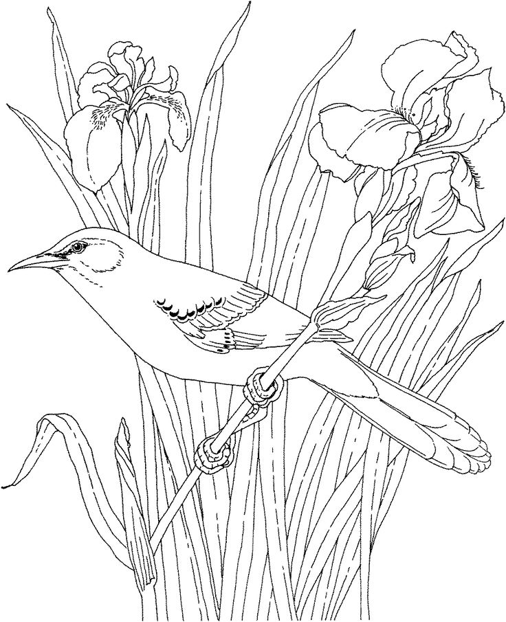 Free Printable Coloring PageTennessee State Bird And Flower Mockingbird Iris