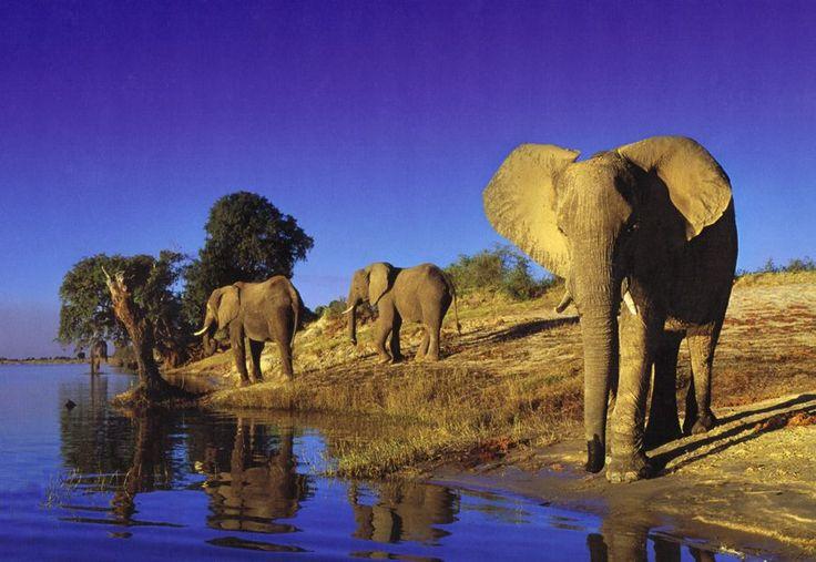 Thirsty Elefant Puslespil