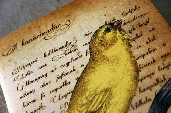 Canary bird journal vintage style illustration by GuBoArtBook,
